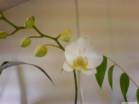Orchideen Pflege Blätter 5335 meine pflanzen 15 gute zeiten schlechte zeiten