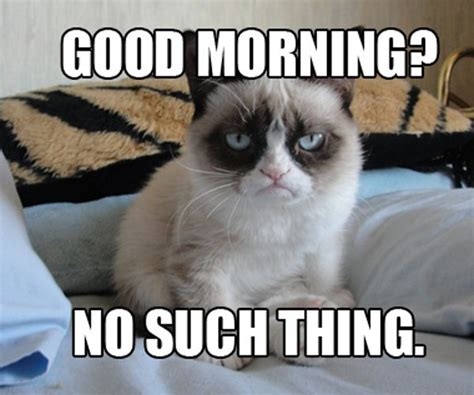 Best Of Grumpy Cat Meme - best grumpy cat memes