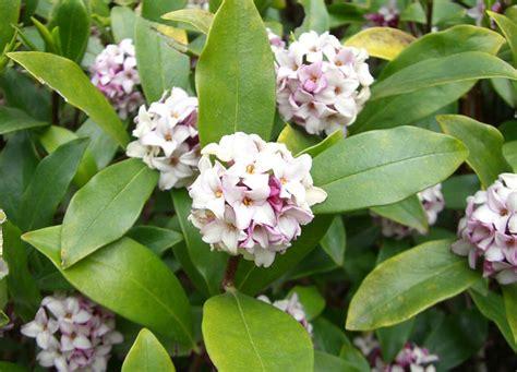 garden flowers all year shrubs that bloom all year year shrubs according