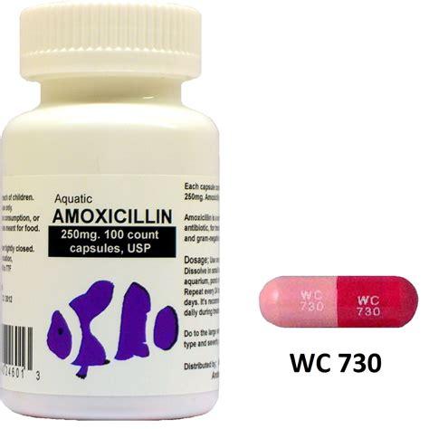 can dogs take amoxicillin amoxicillin 250 mg dosage for dogs cytotec misoprostol bijsluiter