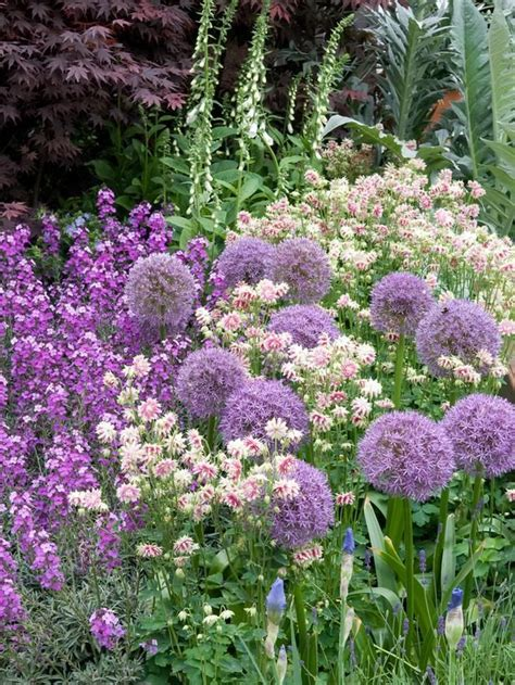 Cottage Garden Planting Scheme by 106 Best Beautiful Planting In Colour Schemes Images On