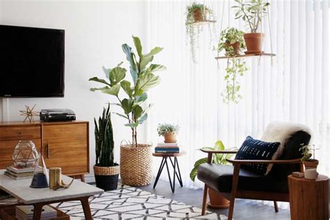 decorative plants for living room before after new darlings desert inspired home