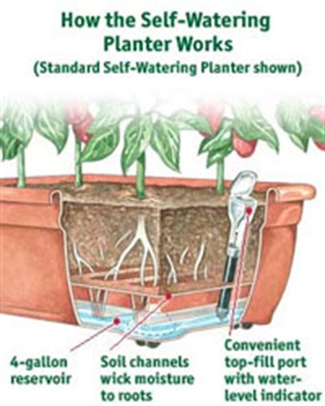 how to make a self watering planter gardening with vegetables gardens