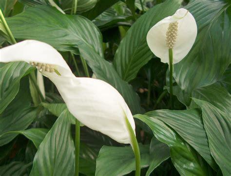 plante verte d int 233 rieur avec fleur blanche photos de