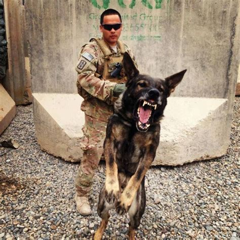 army dogs 25 best ideas about army dogs on service dogs and
