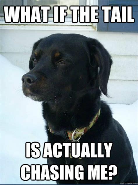 Black Lab Meme - funny labrador memes