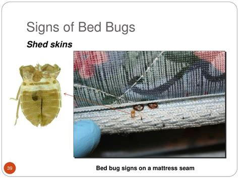 signs of bed bugs in couch signs of bed bugs in couch signs of bed bugs 28 images