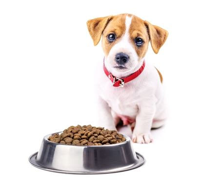best food grain free top 7 best grain free puppy food brands in 2017