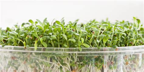 Broccoli Sprouts Helath Benefits Detox by This Health Food May Actually Deserve To Be Called