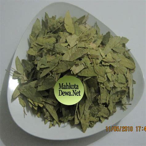 Teh Daun Jati Cina 500 Grm daun jati cina ratu agung herbal