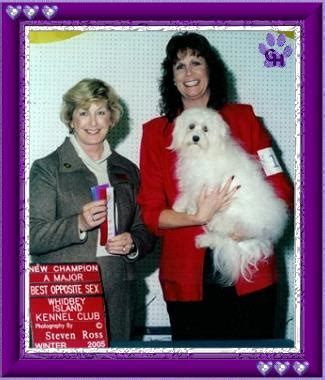 grandview havanese ch flaming geysers n tell grandview havanese