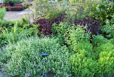 planting a culinary herb garden landscaping gardening culinary herb garden design ideas landscaping