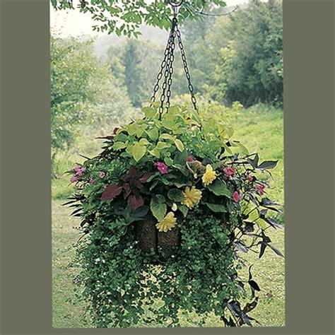 decorative garden hanging baskets decorative hanging baskets kinsman garden