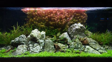 Aquascape Tank For Sale by Exle No 27886 From The Category Aquascaping