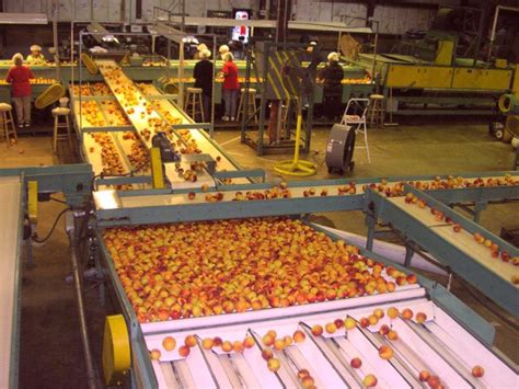 perm processing strict food safety practices on nj farms jersey peaches
