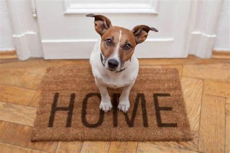 hund in wohnung wann muss der vermieter den hund erlauben