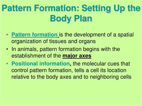 pattern formation ppt ppt embryonic development cell differentiation