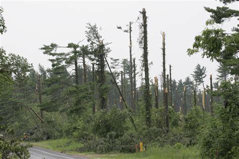 Tornadoes Dealt Trees In Region A Savage Blow Landscape
