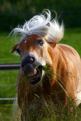 zahnprobleme beim pferd pferdezaehne zahnschmerzen beim