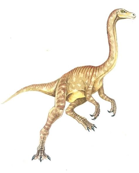 google images dinosaurs 9 best images about raptors on pinterest jurassic world