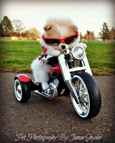 bentley motorcycle not so shabby shabby chic biker bentley