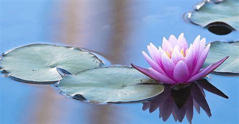 imagenes del zen jard 237 n zen elegancia natural blog verdecora