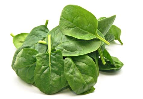 is spinach for dogs bad vegetables for dogs cuteness