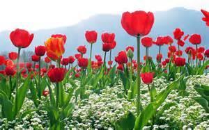 best flowers desktop best flower wallpapers wallpapers13 com