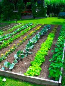 How To Layout A Vegetable Garden Backyard Vegetable Garden Design Plans Ideas Stlhandmade