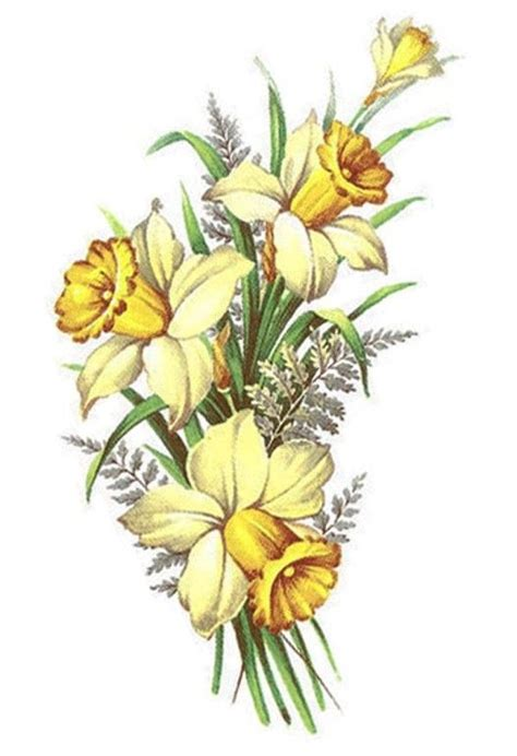 daffodil flower tattoo designs best 25 daffodil ideas on