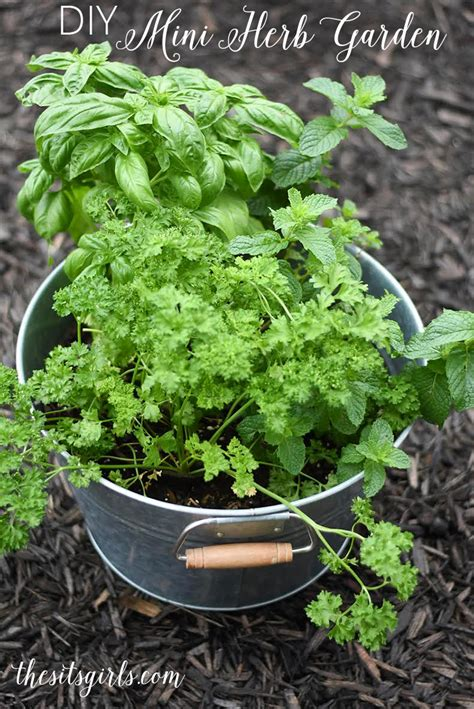 mini herb garden diy mini herb garden