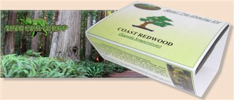 grow your own tree kit grow your own coast redwood bonsai tree kit sequoia sempervirens ebay