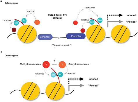 frontiers epigenetic control of defense signaling and