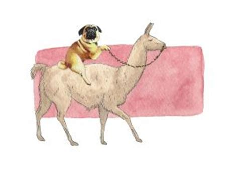 pugs sydney 31 best images about my illustrations on chihuahuas cats and haunted houses