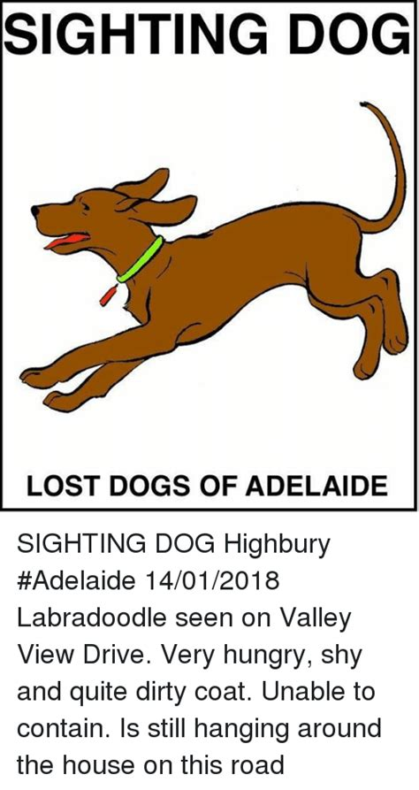 dog house adelaide sighting dog lost dogs of adelaide sighting dog highbury adelaide 14012018
