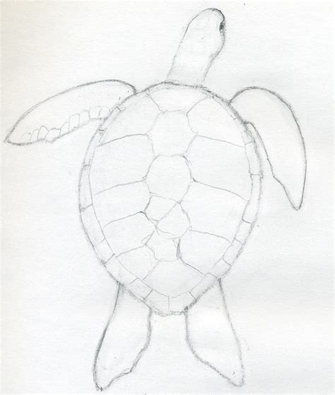 Sketches Easy To Draw by How To Draw A Turtle