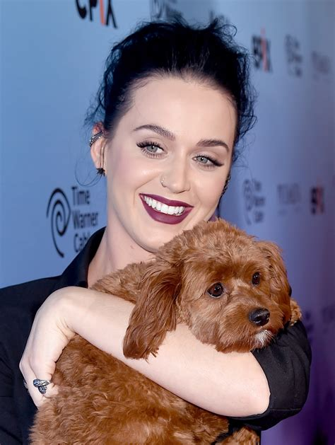katy perry puppy 30 who their dogs gallery dogtime