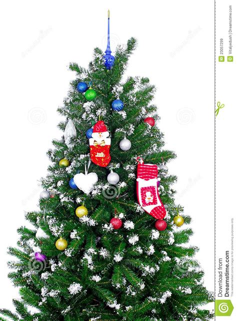 fragment of a christmas tree isolated royalty free stock