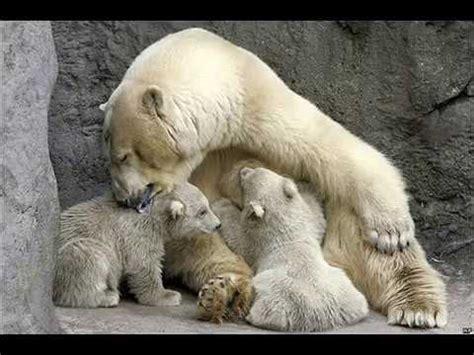 imagenes animales mamiferos animales oviparos y mamiferos youtube