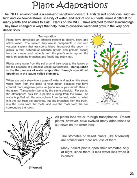 Answer Garden Definition Plant Adaptations Barton4thgrade Weebly