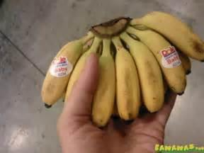 super small bananas bananas org