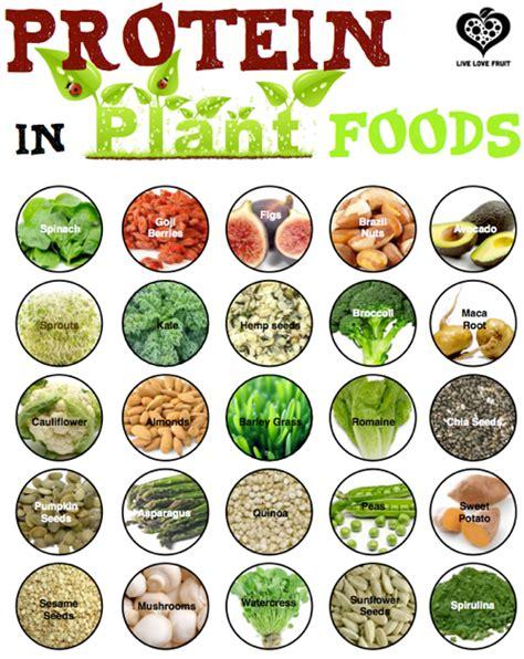 protein vegan diet s vegan nutrition journey urbanveganchic