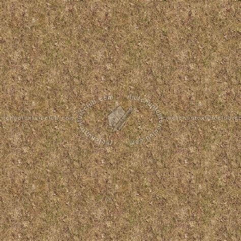 How To Clean Flat Paint Walls Dry Grass Texture Seamless 12934
