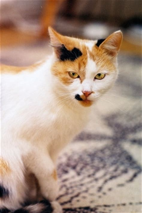 what neutralizes urine how to neutralize a cat urine smell ehow