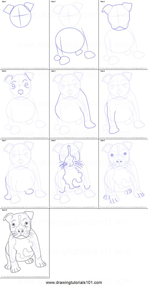how to a pitbull puppy how to draw a pitbull puppy printable step by step drawing sheet drawingtutorials101