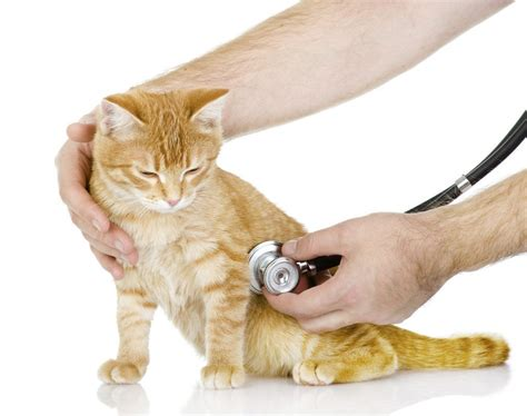 is lethargic top symptoms that you a sick cat