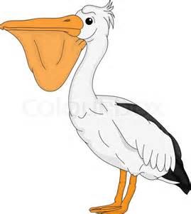 vector pelican bird isolated on background vector