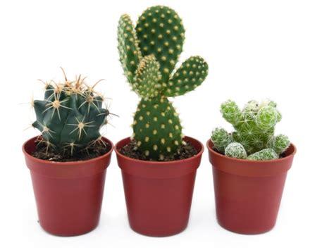bloemen stoelinga cactussen en vetplanten assortiment bloemisterij