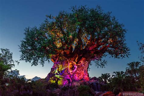 tree of life video the tree of life awakenings at disney s animal kingdom