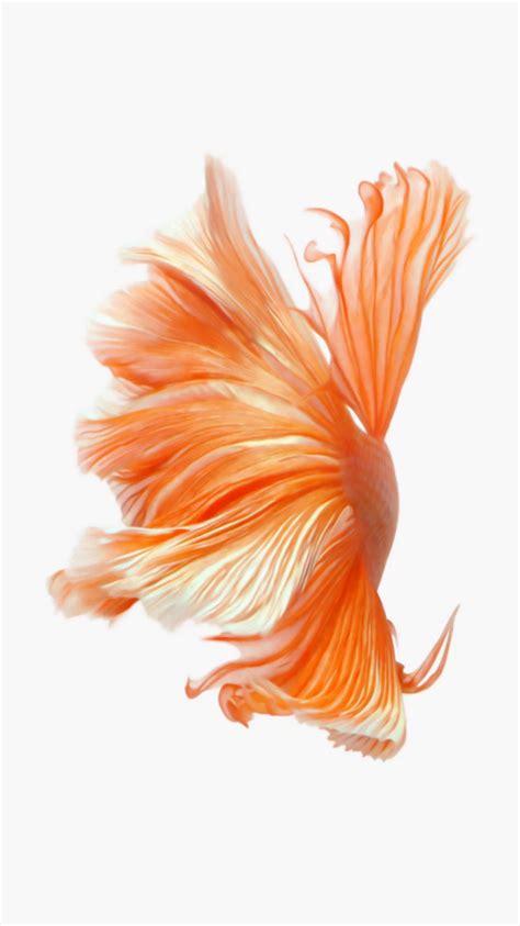 wallpaper iphone 6 fish ภาพพ นหล งร ปปลาก ดสวยๆ ท เห นใน iphone 6s